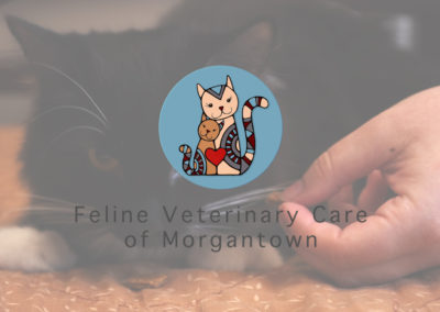 Feline Veterinary Care of Morgantown